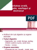 Curs Sistem Digestiv