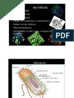 Bacterias- apresentaçao