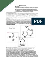 Ácidos nucleicos y Proteinas