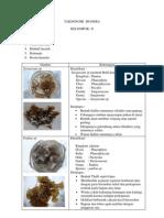 Taksonomi Monera