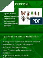 Presentcion Insectos2012