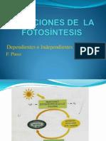 Reacciones Fotosíntesis