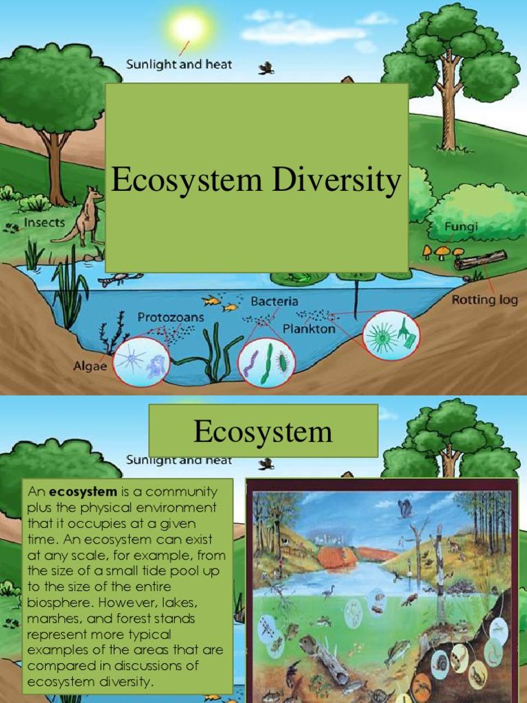 Ecosystem Diversity Evolution Mutation