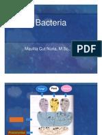Bacteria.pdf