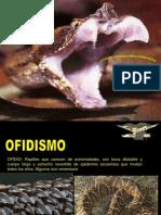 OFIDISMO.ppt