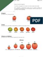 Classificação tomate