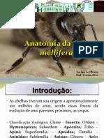 Anatomia da Apis mellifera