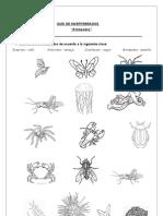 Guía Invertebrados
