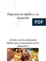 Digestion y Absorcion de Lipidos