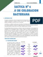 Practica 6 Microbiologia