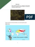 Boala Lyme-Informatii Pentru Public