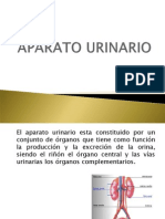 aparato urinario de nivelación