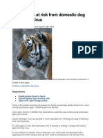 Dog Disease in Tigers