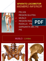 8 Muslo