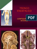 17- TRONCO ENCEFALICO-2