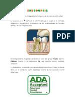 Endodoncia- Raquel.docx