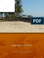 127172 Nervous System