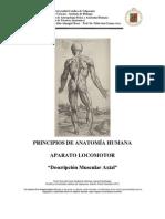 Descripcion Anatomia Musculos Axial PUCV 2012