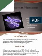 Presentacion cromosomas