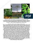 Moringa Tree Information- A Great Introduction