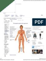 Principales Arterias Del Organismo - Doctissimo