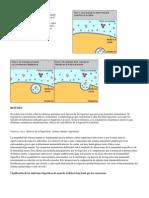 Procesos de Fagocitosis