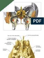 etmoides.pptx