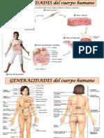 GENERALIDADES del cuerpo humano y del sistema esqueletico.pptx
