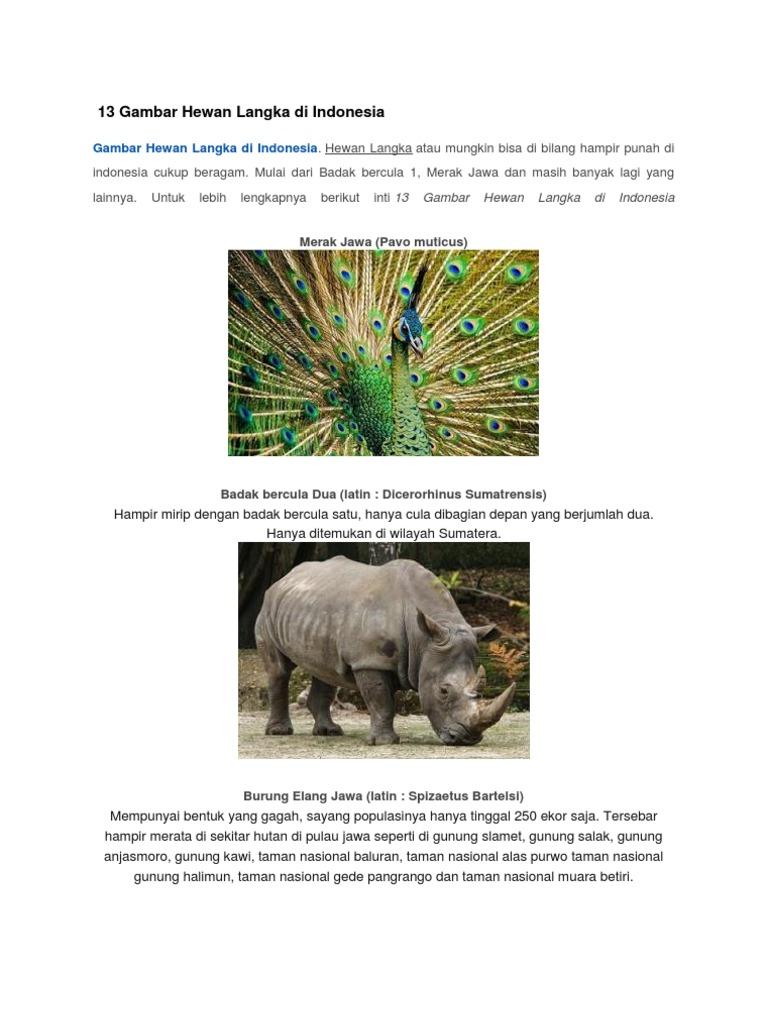 8300 Gambar Hewan Langka Di Pulau Jawa Terbaru