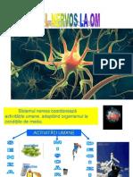 Sistem Nervo s