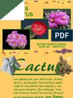 cactus-091028161146-phpapp02