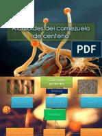 Farmacología clínica de los alcaloides del cornezuelo (1)