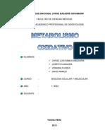 metabolismo oxidativo1