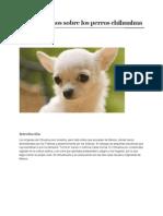 Datos Curiosos Sobre Los Perros Chihuahua