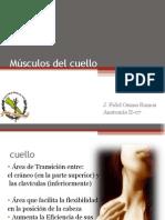 Músculos del cuello Anatomia