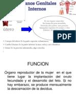Anatomia Del Aparato Reproductor Femenino Repaso