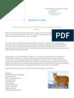 Gastritis in Cats