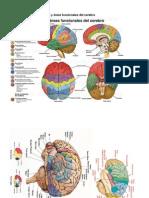 Varios - Laminas Anatomia Del Cerebro 0000