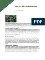 Protección contra el frío para plantas de pimiento