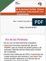 TEORIA 24-Via de La Pentosa Fosfato.