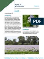 Water Hyacinth Web