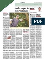 Entrevista Sílvio Brienza-sobre especie florestal_taxi-branco