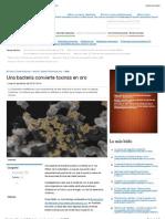 Una bacteria convierte toxinas en oro - vida21 | Perú 21