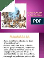 Clasificacion y Taxonomia de Los Mamiferos