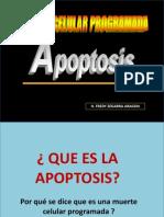 APOPTOSIS DIAPOSITIVAS 2011.pptx
