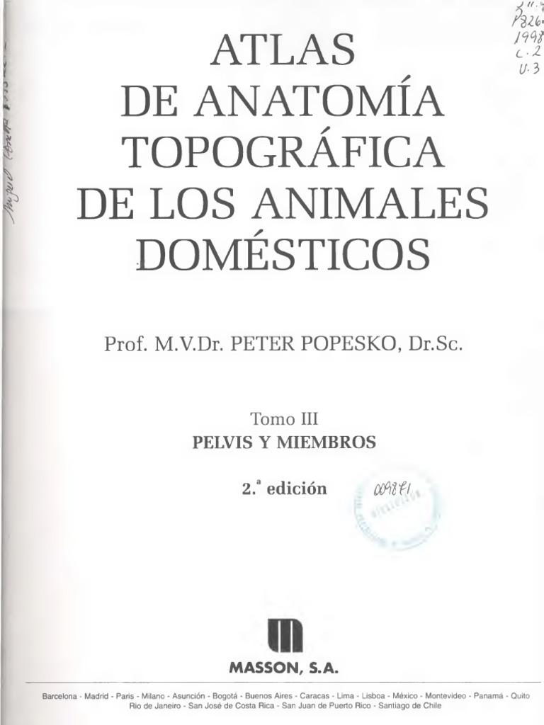 Atlas de anatomía topográfica de los animales domésticos (3) - Peter ...