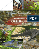 Tropical Fish a Beginners Guide