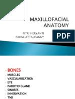 Anatomi Maksilofasial