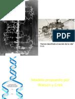 Replicación ADN (AB)