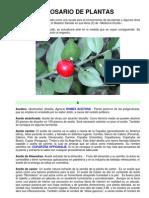 30 02 Glosario de Plantas Www.gftaognosticaespiritual.org